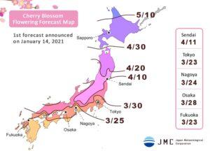 previsioni 2021 della fioritura dei ciliegi in Giappone